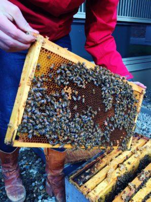 BOMA BEST Environmental Corner – Hines Does Bees